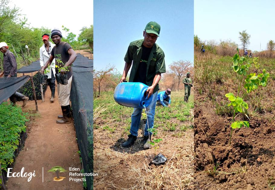Tree Aid Nakolo Union Members in Africa